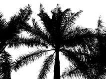 Σκιαγραφία φοινικών Στοκ Εικόνα