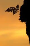 σκιαγραφία φτερών Στοκ φωτογραφίες με δικαίωμα ελεύθερης χρήσης