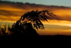 σκιαγραφία φυτών Στοκ Φωτογραφίες
