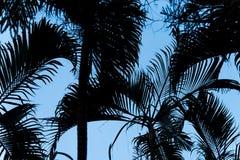 Σκιαγραφία φύλλων φοινικών με το μπλε ουρανό στοκ εικόνες με δικαίωμα ελεύθερης χρήσης