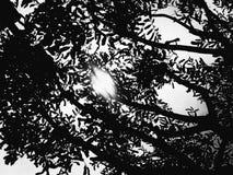 Σκιαγραφία φύσης Στοκ Φωτογραφίες