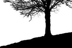 Σκιαγραφία χειμερινών δέντρων - εξελικτικό διάνυσμα μορφής ελεύθερη απεικόνιση δικαιώματος