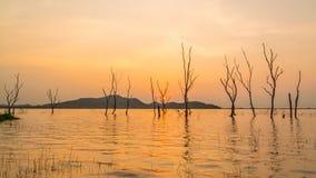 Σκιαγραφία χρονικού σφάλματος του ξηρού δέντρου στο νερό στη δεξαμενή Phra κτυπήματος στο ηλιοβασίλεμα, περιοχή Sriracha, Chonbur απόθεμα βίντεο