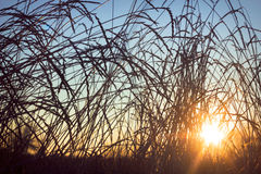 Σκιαγραφία χλόης σε ένα ηλιοβασίλεμα στοκ φωτογραφίες