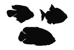 Σκιαγραφία ψαριών διανυσματική απεικόνιση