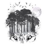 Σκιαγραφία λύκων στο δασικό υπόβαθρο στοκ φωτογραφίες
