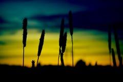 Σκιαγραφία cropfield Στοκ Φωτογραφία