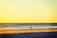 Σκιαγραφία Surfer στο Newport Beach Στοκ φωτογραφία με δικαίωμα ελεύθερης χρήσης