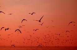 Σκιαγραφία Uncountable άγρια Seagulls που πετούν πέρα από τη θάλασσα στη δονούμενη διαβάθμιση κόκκινου χρώματος στοκ εικόνα με δικαίωμα ελεύθερης χρήσης
