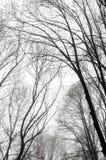 Σκιαγραφίες δέντρων ενάντια σε έναν νεφελώδη ουρανό Στοκ φωτογραφίες με δικαίωμα ελεύθερης χρήσης