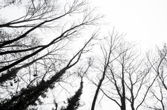 Σκιαγραφίες δέντρων ενάντια σε έναν νεφελώδη ουρανό Στοκ Φωτογραφία