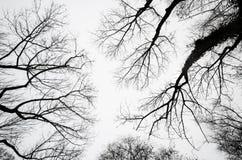 Σκιαγραφίες δέντρων ενάντια σε έναν νεφελώδη ουρανό στοκ εικόνες