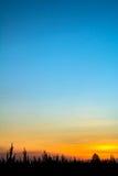 Σκιαγραφίες δέντρων με τον ουρανό Στοκ φωτογραφία με δικαίωμα ελεύθερης χρήσης