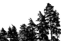 Σκιαγραφίες δέντρων πεύκων που απομονώνονται στο λευκό στοκ εικόνα με δικαίωμα ελεύθερης χρήσης