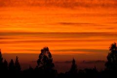 Σκιαγραφίες δέντρων στο πορτοκαλί φως ηλιοβασιλέματος Στοκ φωτογραφία με δικαίωμα ελεύθερης χρήσης