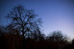 Σκιαγραφίες δέντρων Στοκ φωτογραφία με δικαίωμα ελεύθερης χρήσης