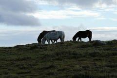 Σκιαγραφίες αλόγων οριζόντων Στοκ φωτογραφία με δικαίωμα ελεύθερης χρήσης