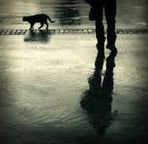 Σκιαγραφίες γατών και ατόμων Στοκ Εικόνες