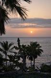 Σκιαγραφίες και ηλιοβασίλεμα φοινικών πέρα από τον ωκεανό Στοκ εικόνες με δικαίωμα ελεύθερης χρήσης