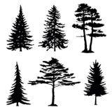 Σκιαγραφίες κωνοφόρων δέντρων, συλλογή Στοκ Εικόνα