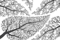 Σκιαγραφίες κλάδων στο λευκό. Διανυσματικό υπόβαθρο Στοκ Εικόνες