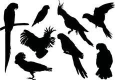 σκιαγραφίες παπαγάλων σ&up Στοκ Εικόνες