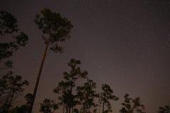 Σκιαγραφίες πεύκων ενάντια στα αστέρια Στοκ εικόνα με δικαίωμα ελεύθερης χρήσης