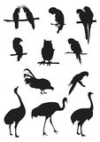 σκιαγραφίες πουλιών διανυσματική απεικόνιση