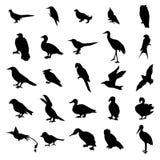 Σκιαγραφίες πουλιών καθορισμένες Στοκ Φωτογραφία