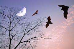 Σκιαγραφίες ροπάλων πέρα από τον όμορφο κλάδο και το μισό φεγγάρι ως hallowee Στοκ φωτογραφία με δικαίωμα ελεύθερης χρήσης