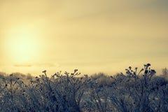 Σκιαγραφίες της ξηράς χλόης στην ανατολή στην υδρονέφωση ένας παγωμένος στοκ εικόνα με δικαίωμα ελεύθερης χρήσης