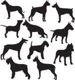 Σκιαγραφίες της στάσης που λειτουργεί τα σκυλιά Στοκ Εικόνες