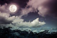 Σκιαγραφίες του δέντρου και του νυχτερινού ουρανού με τα σύννεφα, φωτεινό πλήρες μ στοκ εικόνα με δικαίωμα ελεύθερης χρήσης