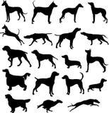 Σκιαγραφίες του κυνηγιού των σκυλιών στο σημείο και την κίνηση Στοκ Φωτογραφία