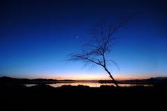Σκιαγραφίες του λυκόφατος δέντρων. Στοκ Φωτογραφίες