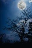Σκιαγραφίες του ξηρού δέντρου ενάντια στο μπλε ουρανό και την όμορφη ανατολή του φεγγαριού Στοκ φωτογραφίες με δικαίωμα ελεύθερης χρήσης