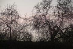 Σκιαγραφίες των δέντρων Στοκ φωτογραφίες με δικαίωμα ελεύθερης χρήσης