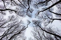 Σκιαγραφίες των γυμνών δέντρων Στοκ φωτογραφίες με δικαίωμα ελεύθερης χρήσης