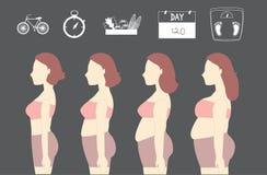 Σκιαγραφίες των γυναικών που χάνουν το βάρος, απεικονίσεις Στοκ φωτογραφία με δικαίωμα ελεύθερης χρήσης
