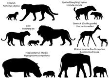 Σκιαγραφίες των ζώων της Αφρικής με cubs Απεικόνιση αποθεμάτων