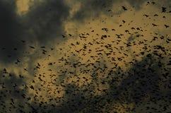Σκιαγραφίες των κοράκων στο δραματικό υπόβαθρο ουρανού με τα σύννεφα Στοκ Φωτογραφία