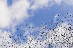 Σκιαγραφίες των κοράκων στο δραματικό υπόβαθρο ουρανού με τα σύννεφα Στοκ Εικόνες