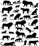 Σκιαγραφίες των λιονταριών και cubs λιονταριών Διανυσματική απεικόνιση