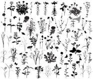 66 σκιαγραφίες των λουλουδιών και των εγκαταστάσεων 10 σκιαγραφίες των εντόμων Απεικόνιση αποθεμάτων