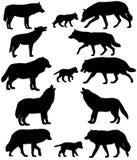 Σκιαγραφίες των λύκων και λύκος-wolf-cubs Ελεύθερη απεικόνιση δικαιώματος