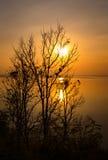 Σκιαγραφίες των ξύλων στο θερινό ζωηρόχρωμο ηλιοβασίλεμα Compositi φύσης Στοκ Εικόνες