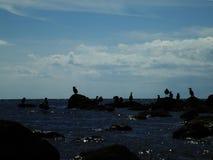 Σκιαγραφίες των πουλιών στην παραλία στο ηλιοβασίλεμα στοκ εικόνες με δικαίωμα ελεύθερης χρήσης