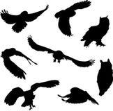 Σκιαγραφίες των πουλιών. κουκουβάγια, μπούφος Στοκ Φωτογραφία