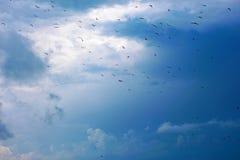 Σκιαγραφίες των πουλιών στον ουρανό υποβάθρου Στοκ Φωτογραφία