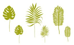 Σκιαγραφίες των τροπικών φύλλων απεικόνιση αποθεμάτων